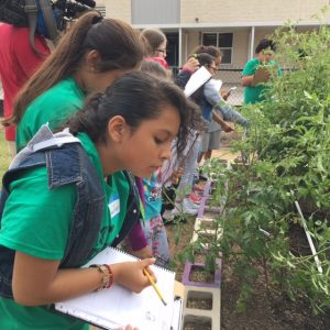 Students in Texas Sprouts garden